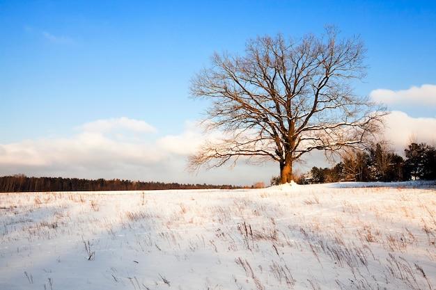 Een boom groeit in een veld in een winterseizoen