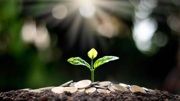 Een boom groeit op een stapel munten en een wit licht schijnt op het idee van de economische groei van de boom.
