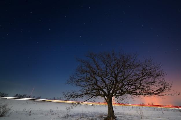 Een boom in de buurt van de weg tegen de achtergrond van de sterrenhemel in de winter.