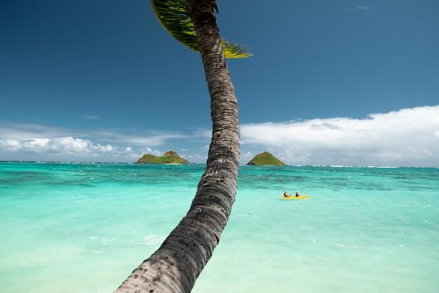 Een boom in de buurt van heldere zee, omringd door bergen onder een heldere blauwe hemel