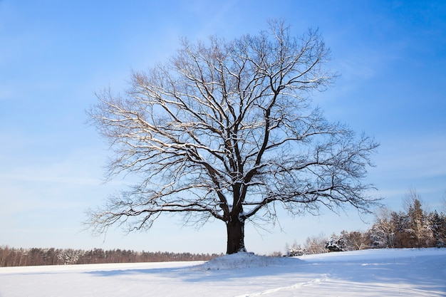 Een boom in een winterseizoen na de laatste sneeuwval