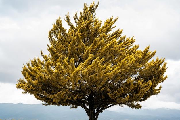Een boom met gele bladeren bij slecht weer