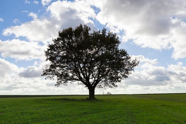 Een boom met wolken