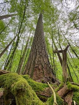 Een boomstam begroeid met mos in het bos onderaanzicht