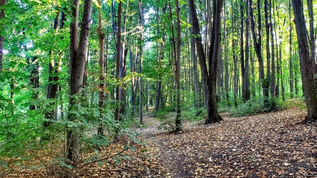 Een bos met een pad door de groene bomen en struiken, gevallen bladeren op de grond, chisinau, moldavië