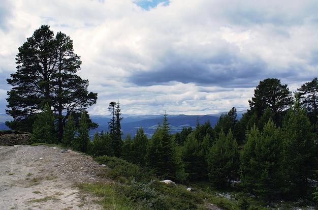 Een bos met veel groene bomen omgeven door hoge bergen onder een bewolkte hemel in noorwegen