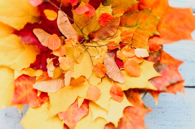 Een bos rode en gele droge esdoornbladeren in de herfst en herfsttakjes op een blauwe houten achtergrond