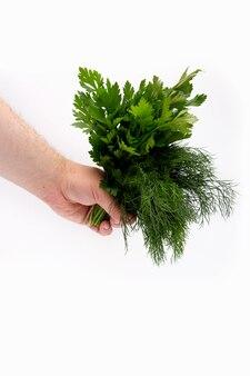 Een bos van dille en stempelbladeren in een man hand op wit