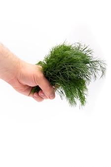Een bos van dille gaat in een man hand op wit weg
