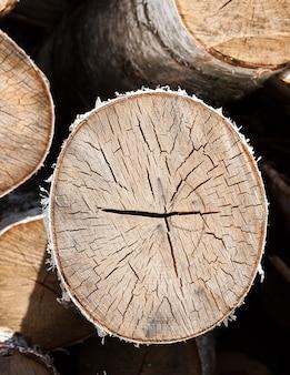 Een bos van oude gebarsten berkenstammen na het doorsnijden voor houtkap, liggen voor verwerking in de industrie