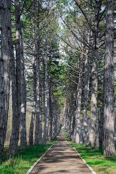 Een bosbergweg, omzoomd met pijnbomen, in de buurt van park in de lente.
