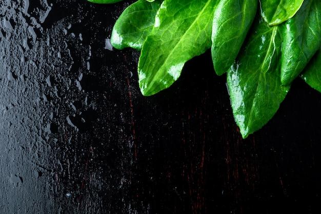 Een bosje spinazie vertrekt op een donkere zwarte achtergrond.