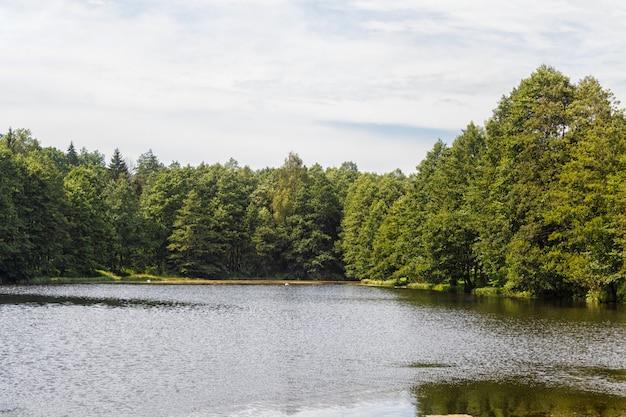 Een bosmeer omgeven door bomen