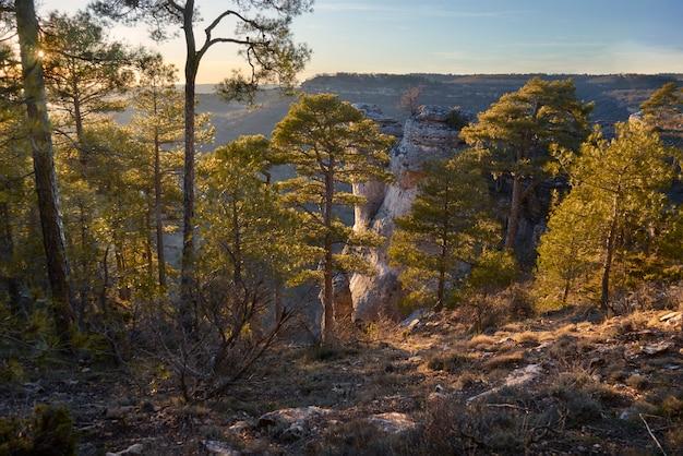 Een bosrijk landschap