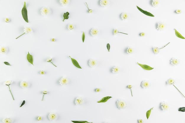 Een bovenaanzicht van chrysanthemum en bladeren verspreid over witte achtergrond