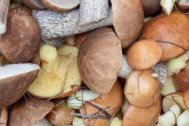 Een bovenaanzicht van een groep verschillende paddenstoelen verspreid over een rode zak verzameld in het bos, ondiepe scherptediepte. natuurlijk vegetarisch voedselconcept