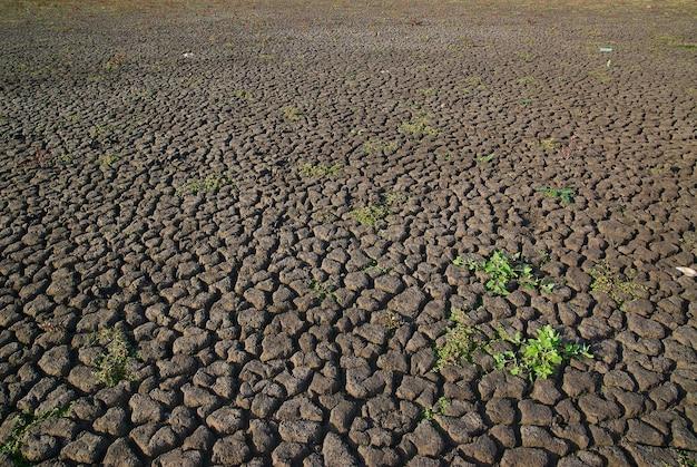 Een bovenaanzicht van een uitgedroogd veld met kleine stukjes bloeiend groen