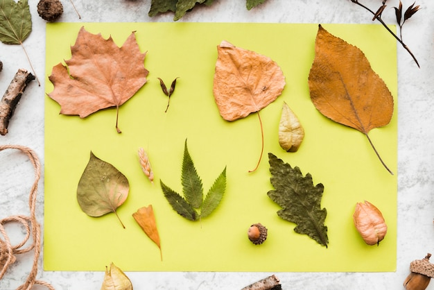 Een bovenaanzicht van gedroogde herfstbladeren en eikel op groene munt papier op gestructureerde achtergrond