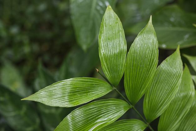 Een bovenaanzicht van groene verse bladeren