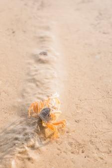 Een bovenaanzicht van krab op nat zand