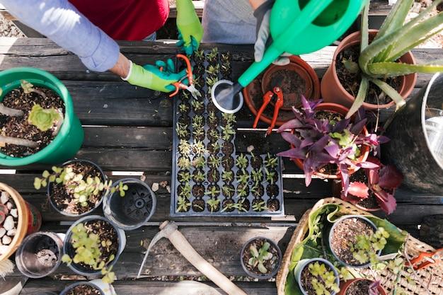 Een bovenaanzicht van mannelijke en vrouwelijke tuinman snoeien en de zaailing planten water geven