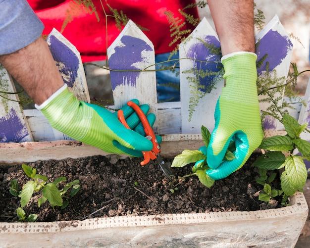 Een bovenaanzicht van mannelijke tuinman die de zaailingsinstallatie snoeit met snoeischaar