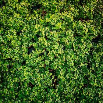 Een bovenaanzicht van plant met groene verse bladeren