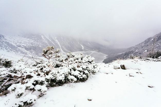 Een bovenaanzicht van sneeuw bedekt bomen in de winter