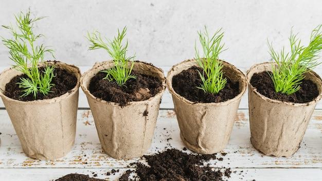Een bovenaanzicht van turf potten met dille planten op houten tafel