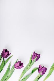 Een bovenaanzicht van verse felle kleur tulpen op een witte achtergrond