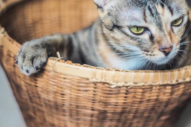 Een boze grijze en bruine gestreepte kat in geweven mand
