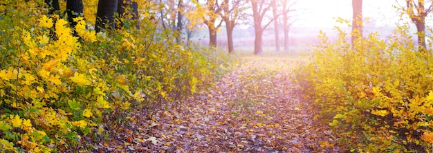 Een brede weg in het herfstbos leidt naar de rivier. gouden herfst in het bos