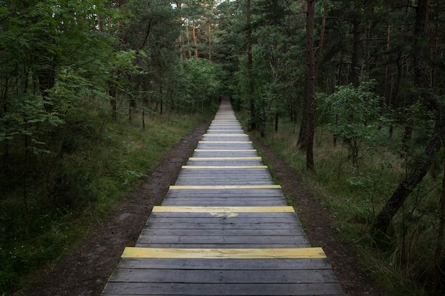 Een breed recht pad bedekt met een vloer van planken gaat in perspectief in een donker bos