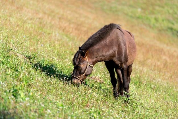 Een bruin en dun paard staat in een veld met groen gras.