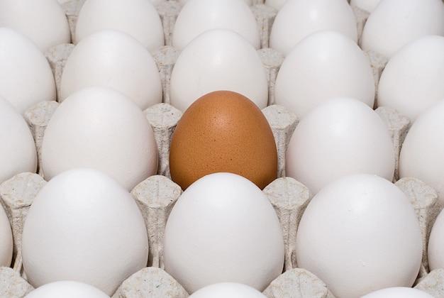 Een bruin kippenei in een bakje met witte eieren