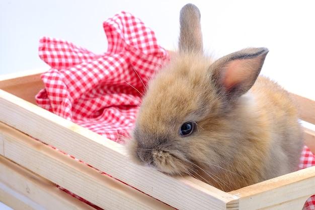Een bruin konijn op een houten doos