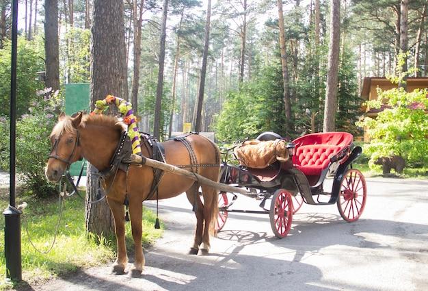 Een bruin paard dat aan een koets wordt gespannen. de oude bemanning