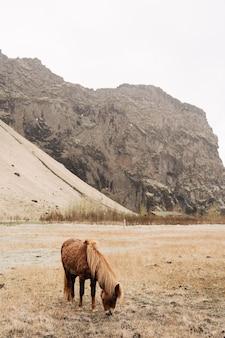 Een bruin paard met mooie manen graast in een veld en plukt gras op een achtergrond van een rotsachtig