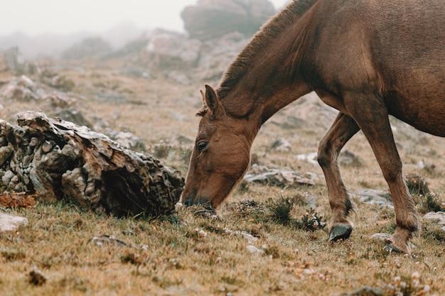 Een close-up paard gras eten op mistig weer