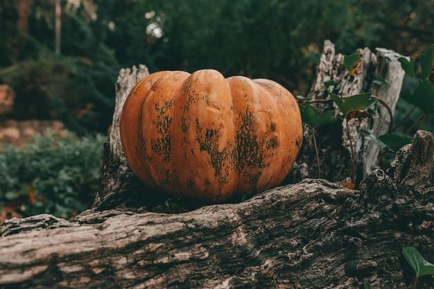 Een close-up shot van een pompoen op een houten oppervlak in een herfst bos