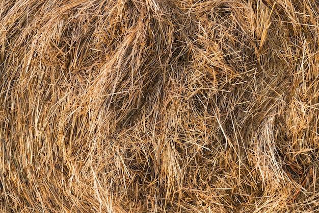 Een close-up shot van een verdraaide hooiberg, droog stro. hooi textuur. oogstconcept in de landbouw.