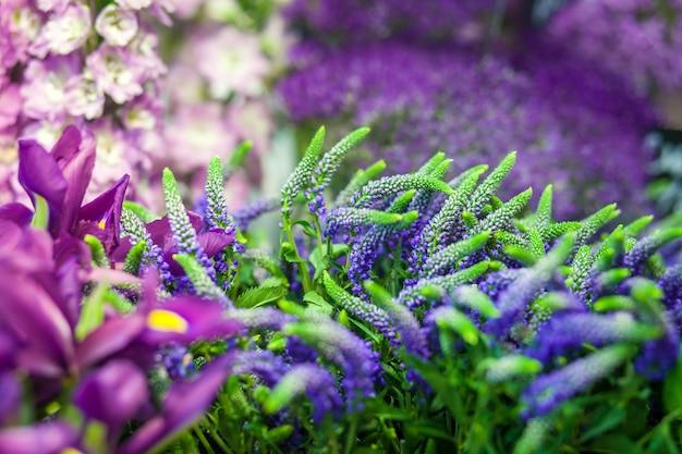 Een close-up van de bloemen in paars