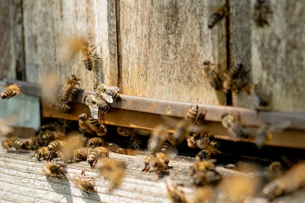 Een close-up van de werkende bijen die bloemstuifmeel naar de korf op zijn poten brengen