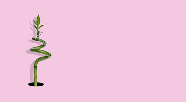 Een creatieve platte lay-out van plantbloemenbladeren in het gat, tropisch minimalisme-concept