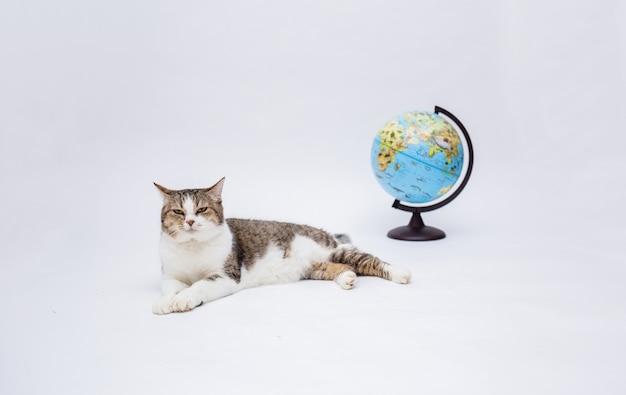 Een cyperse kat ligt met een wereldbol op een wit geïsoleerd oppervlak met een kopie van de ruimte
