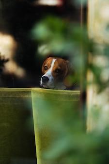 Een dakloze hond kijkt uit het raam