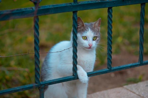 Een dakloze kat die door metaal kijkt