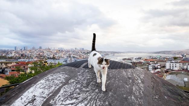 Een dakloze kat met wit en bruin bont op een dok met uitzicht op istanbul, istanbul
