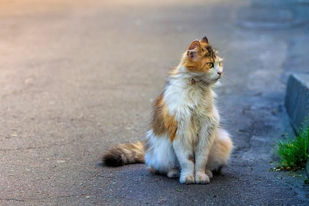Een dakloze kat zit op de stoep