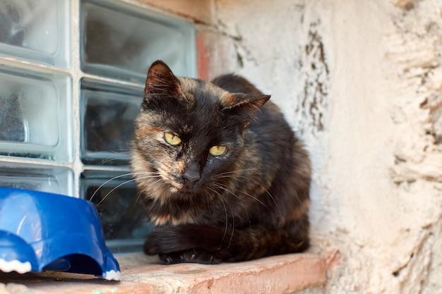 Een dakloze schildpadkat bij een raam die er verdrietig uitziet